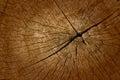 Old teak wood cut texture closeup Royalty Free Stock Photography