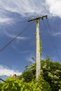 Old telegraph pole ivy covered portesham dorset england united kingdom Royalty Free Stock Image