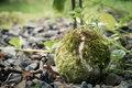 Old tennis ball in nature macro Royalty Free Stock Photo