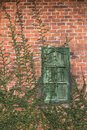 Old Texture brick wall, detailed pattern covered in ivy Royalty Free Stock Photo