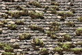 Old tile with moss Royalty Free Stock Photography