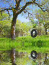 Old Tire Swing - Childhood Memories Royalty Free Stock Photo