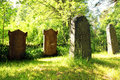 Old tombstones at church yard at midsummer gravestones the corner of a green in sunlight Royalty Free Stock Photography