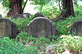 Old tombstones and graveyards in abandoned chinese cemetery Stock Photography