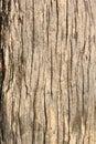 Old tree bark Royalty Free Stock Photo