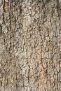 Viejo árbol ladra
