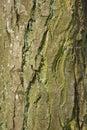 Old tree bark texture close-up Stock Photo