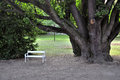 Old tree and bench Royalty Free Stock Photography