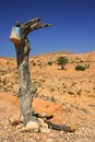 Old tree in the desert in matmata Royalty Free Stock Photography