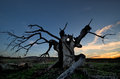 An old tree in strandja mountain struck by lightning Stock Photo