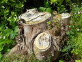 Old tree trunk Stock Images