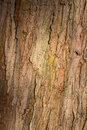 Old tree trunk bark rough background close up texture natural grey Royalty Free Stock Photos