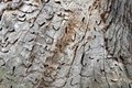Old tree trunk with holes from woodworm and woodpecker