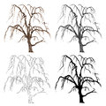 Old tree willow vector