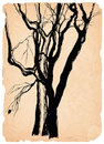 Old trees shabby paper pen drawing Royalty Free Stock Images