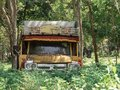 Old truck in the forest, A rusty pickup car wreck is abandoned in the agricultural fields Royalty Free Stock Photo