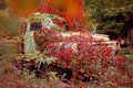 abandoned old truck overgrown with plants Royalty Free Stock Photo