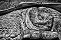 Old turtle a very portrait in dramatic black and white shows the detail of scales Stock Photo