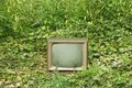 Old TV set among green plants Royalty Free Stock Photography