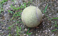 Old used tennis ball Royalty Free Stock Photo