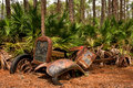 Old vehicle whether was car truck not known was left behind crash front right fender still wrapped around pine tree pieces have Stock Photo