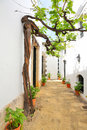 Old vine in the narrow street Royalty Free Stock Photo