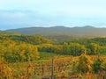 Old vineyard Slovenia Royalty Free Stock Photo
