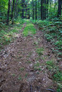Old Wagon Road in the Woods Royalty Free Stock Photo