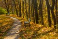Old walkway in autumn park whole background Royalty Free Stock Photography