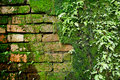 Old wall brick with moss and fern Royalty Free Stock Photo