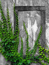 Old wall with ivy Royalty Free Stock Photo