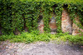 Old wall with ivy plant brick and doors Royalty Free Stock Images