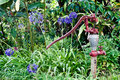 Old water pump in lush garden red a with blue agapantha flowers Stock Photo
