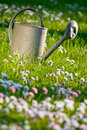 Old watering can in a meadow Royalty Free Stock Images