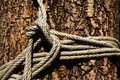 Old white rope tied around a big tree Royalty Free Stock Photo