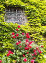 Old window building front with a and decorative plants and flowers italy Stock Photos