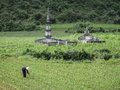 Old woman tending her rice field next to ancient graves phong nha ke bang national park vietnam Stock Image