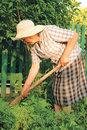 Old woman working in the garden Royalty Free Stock Photo