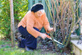 Old woman working in garden elderly using saw tool for spring cleaning lady cutting deadwood from rose bushes sunny day Royalty Free Stock Photos