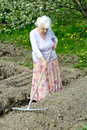 The old woman works in a blossoming garden Royalty Free Stock Photo