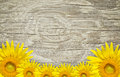 Old wood frame and background with sun flowers Royalty Free Stock Photo