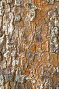 Old wood rind bark tree texture background pattern Royalty Free Stock Photo