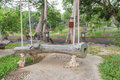 Old wood swing seat have rope White Nature in the garden tree Royalty Free Stock Photo