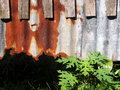 Old wood texture align with rusty metal and green plants roof Royalty Free Stock Image
