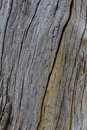 Old wood texture and barkless tropical Stock Photo
