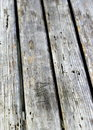 Old wood texture of with many termites holes Royalty Free Stock Image