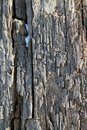 The old wood texture with natural patterns. Inside the tree background. Old grungy and weathered grey wooden wall planks texture b