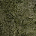 Old wood tree bark texture with green moss Stock Images