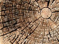 Old Wood Tree Rings Texture Royalty Free Stock Images