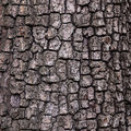Old wood tree texture background bark pattern Royalty Free Stock Photo